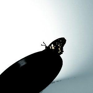 flap modern sconce Black colore